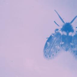 O zen e a arte de matar mosquinhas de banheiro